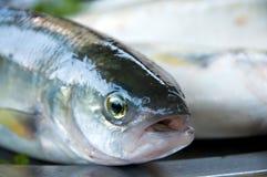 鱼联系 库存照片