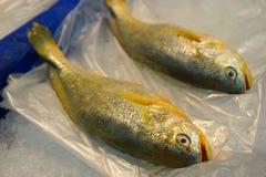 鱼肉 皇族释放例证