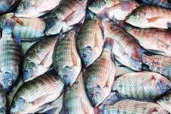 鱼背景,罗非鱼 免版税图库摄影