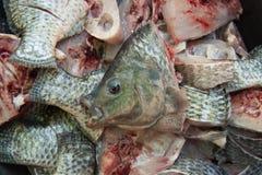 鱼芯片等待的厨师 库存图片