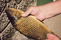 鱼被捉住的抓住在手上在渔夫 免版税图库摄影