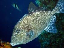 鱼触发器 库存图片