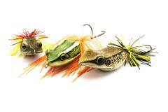 鱼诱饵 库存图片