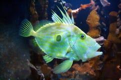 鱼赛马 库存图片