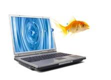 鱼跳 免版税库存图片