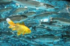 鱼金子 库存图片