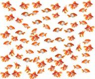 鱼金子 图库摄影