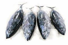 鱼金枪鱼 免版税库存照片