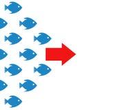 鱼银行跟随方向概念 免版税图库摄影