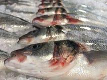 鱼销售额 库存照片
