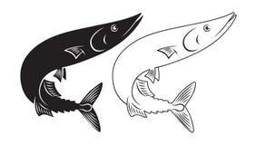 鱼长凳竹刀鱼 图库摄影