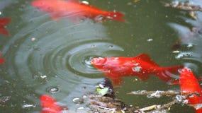 鱼需要空气 免版税库存照片