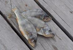 鱼静物画 免版税图库摄影
