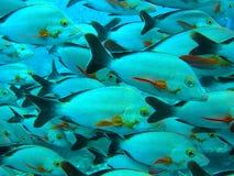 鱼面孔特写镜头 免版税库存图片