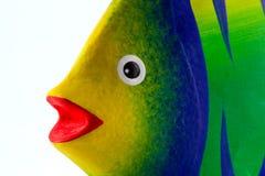 鱼面孔 免版税库存照片