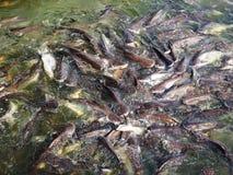 鱼飞溅水 库存图片