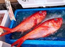 鱼食物新鲜市场海运 库存图片