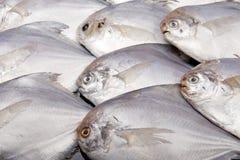 鱼食物海运 库存图片