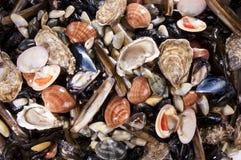 鱼食物混杂的海运 库存照片