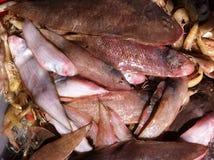 鱼食物荷兰芹牌照烤海运 图库摄影