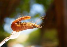 鱼食物荷兰芹牌照烤海运 免版税库存图片