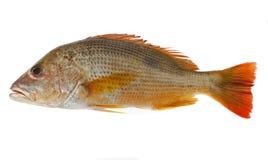鱼食物 免版税库存照片