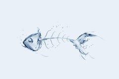 鱼骨水 库存照片