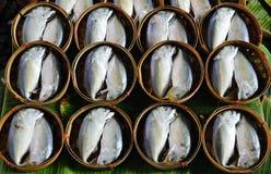鱼鲭鱼 免版税库存图片