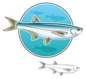 鱼鲱鱼 图库摄影