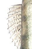 鱼鳞难看的东西纹理 免版税库存图片