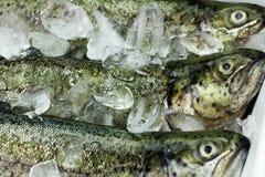 鱼鳟鱼 库存照片