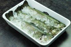 鱼鳟鱼 免版税图库摄影