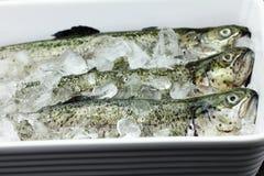 鱼鳟鱼 免版税库存照片
