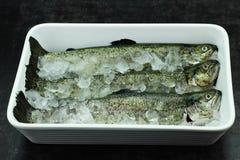 鱼鳟鱼 免版税库存图片