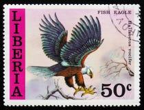 鱼鹰(Haliaeetus vocifer),大约1977年 免版税库存图片