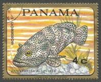 鱼,油腻石斑鱼 免版税库存图片