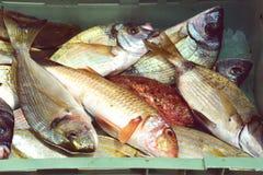 鱼,石头鲈,红鲻鱼,镀金面领袖海鲷新鲜的抓住  免版税库存图片