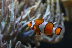 鱼, 免版税图库摄影