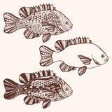 鱼 与种族乱画样式的手拉的幻想鱼 免版税库存图片