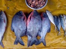 鱼 为油煎准备 图库摄影