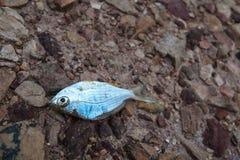 鱼死了岩石地面破裂的地球/天旱/河上被烘干/famine/缺乏/全球性变暖/自然破坏 库存图片