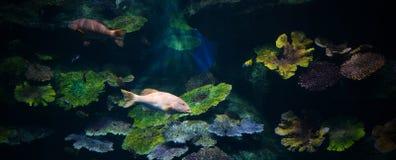鱼水族馆 库存图片
