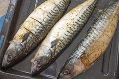 鱼-鲭鱼胴体肉  免版税图库摄影