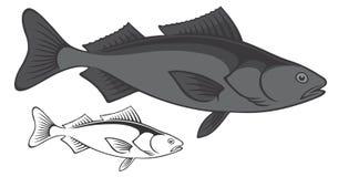 黑鱼 库存照片