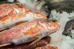 鱼ans海鲜 免版税库存图片