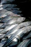鱼fishermens影子 免版税图库摄影