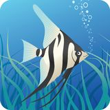 鱼scalaire热带下面水 库存例证