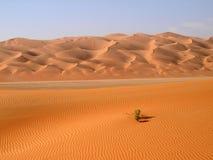 鲁卜哈利沙漠21 库存图片