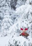 鲁道夫在积雪的森林里 免版税库存图片