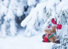 鲁道夫在积雪的森林里 免版税库存照片